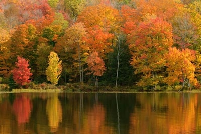 'My November Guest' by Robert Frost