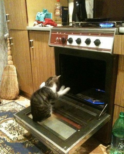 warm kitty
