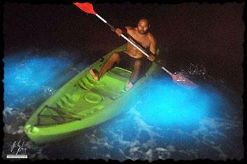 bioluminescent-mosquito-bay-puerto-rico