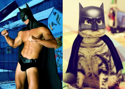 Men and Cats Batman