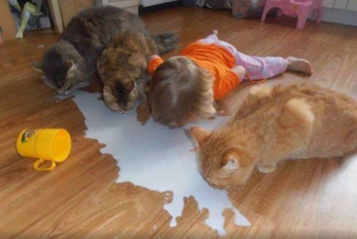 humor, kid, cat, animals