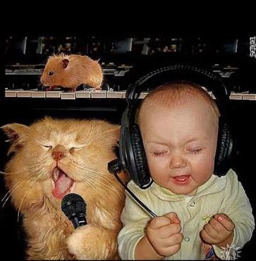 humor, baby, cat, singing