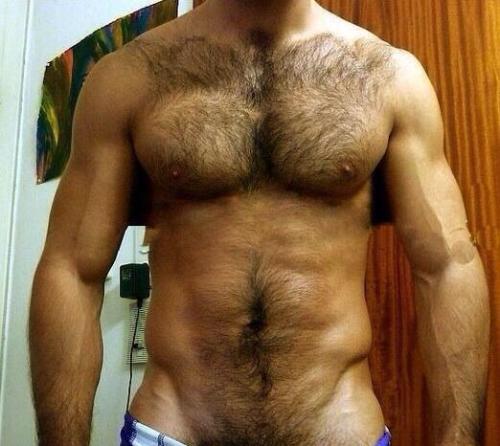 torso, hairy, chest