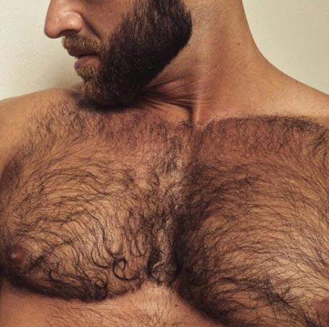 chest, hairy, beard