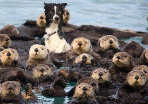 dog, humor, funny