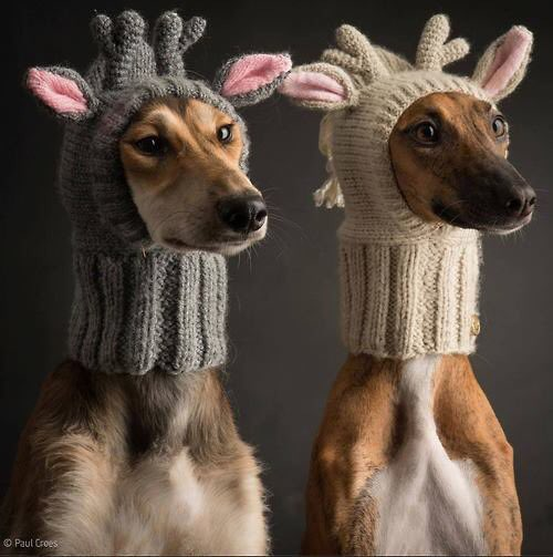 animals, christmas