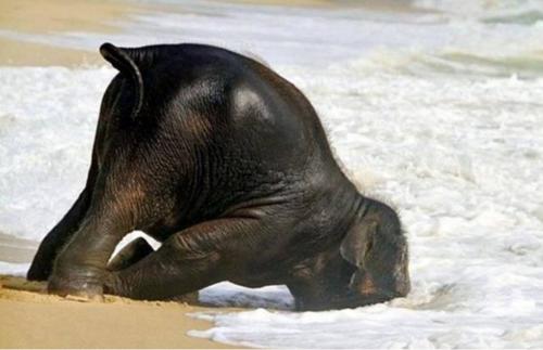 elephant, animal, humor