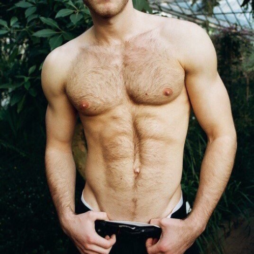 hairy torso, muscles