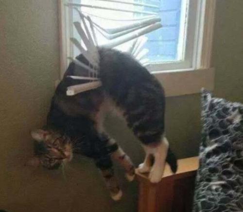 cat, cat humor
