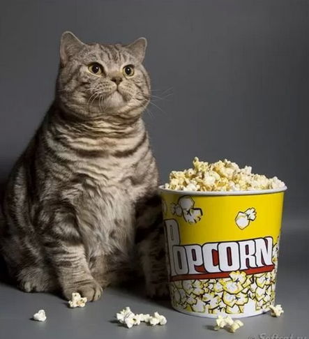 movies, kitty