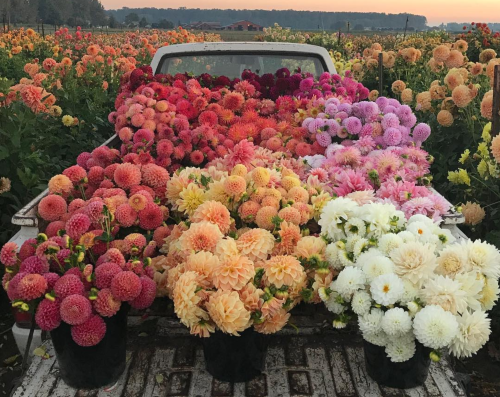 florist, flowers